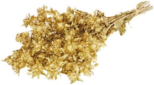 Bidens Carthamus gold bundel droogbloemen
