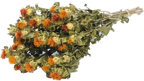 Bidens (Carthamus) Orange natural SB Carthamus