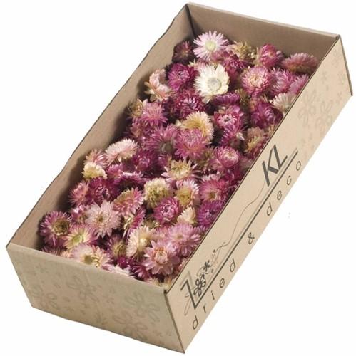Helichrysum heads 100gr SB PINK Strobloemhoofdjes