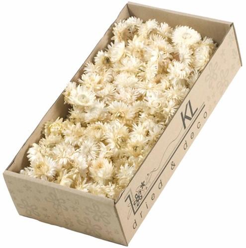 Helichrysum heads 100gr SB Wit Strobloemhoofdjes