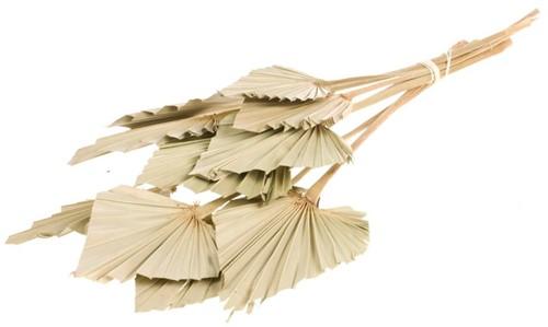 Palmspear 10 st Palmspear blad