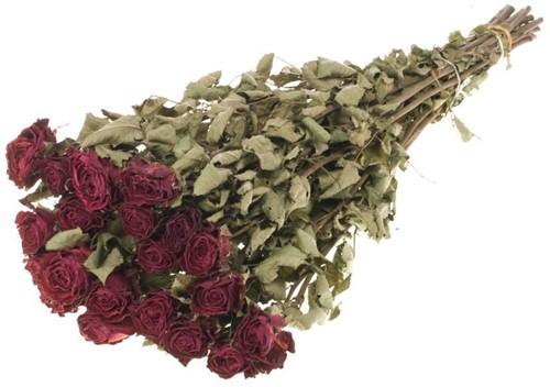 Trosrozen Gedroogd Roses spray natural RED Roses 'Bright Torch' 20pc SB