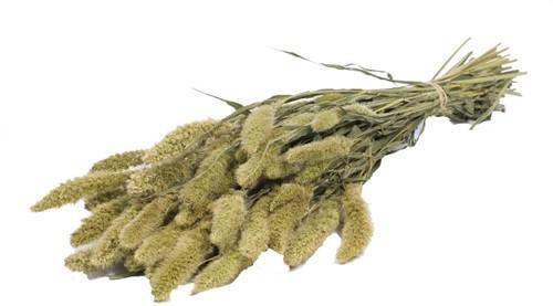 Setaria naturel Siergras 5 takjes Yvonne Trosgierst