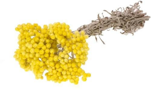 Immortelle natural yellow gele droogbloemen