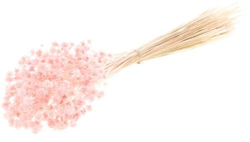 Hill flower 100gr pink misty  fijne droogbloemetjes