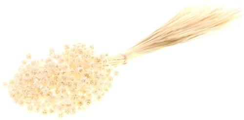 Hill flower 100gr bleached white  fijne droogbloemetjes
