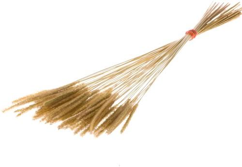 Soft worms grass natural leuk gras en alternatief voor Lagurus