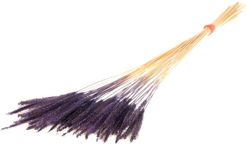 Soft worms grass Purple leuk gras en alternatief voor Lagurus