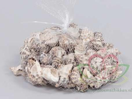 Thais Rustica schelpen +/- 350 gram