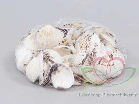 Gafraruim Pectinatum schelpen +/- 350 gram