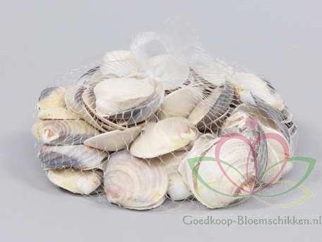 Dosinia Discus schelpen +/- 350 gram