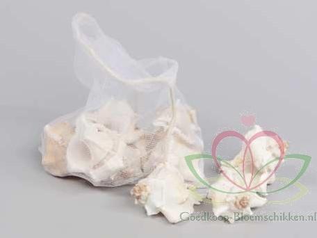 White Mulli schelpen 500 gram