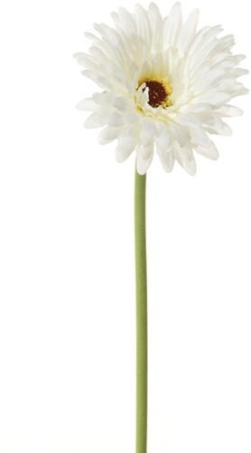 Gerbera 58 cm. Wit Gerbera