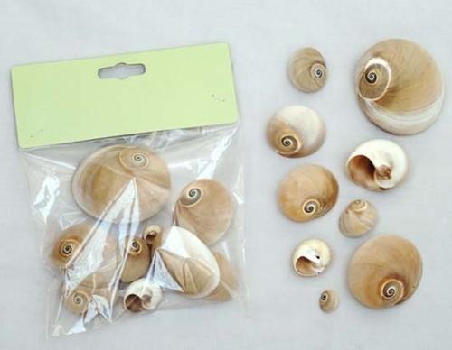 Polinices Didyma schelpen 80 gram