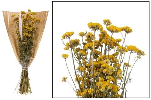 Lona GEEL natural bundel. droogbloemen