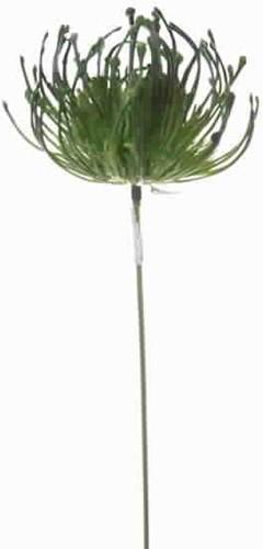 Protea pick corsagevuller Groen / st Protea