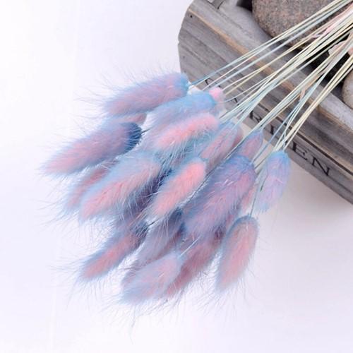 Lagurus Ovatus bundel +/- 30st BlueLilaPurple Pluimgras graspluimen