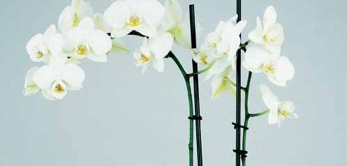 Orchidee planten clip zwart 0, 80 x 50 mm 50 stuks orchidee clipjes