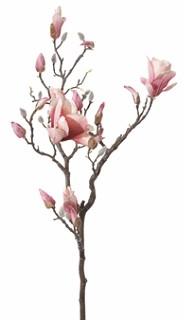 Grote Magnolia TAK 102cm. roze Super mooi