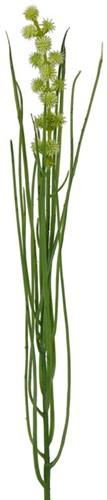 Grasbundel GROEN bloeiend 50 cm/bundel Zijdebloem