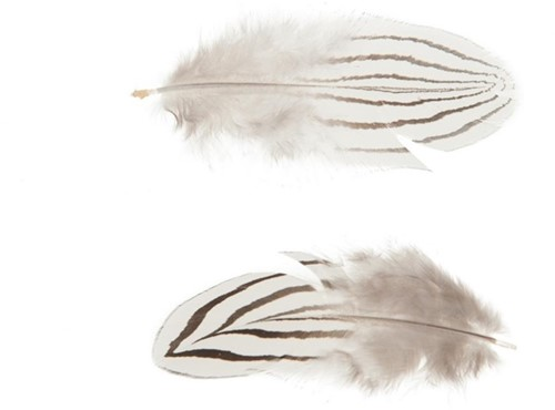 Striped feather 6cm 25pc - Natural Gestreepte Veertjes