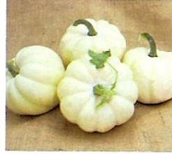 White CloudF1 Acorn White Cloud˜˜F1 Acorn