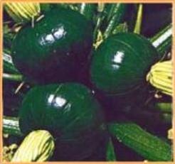 Tronco Redondo Verde -