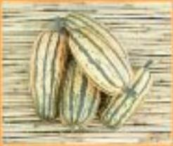 Honeyboat Delicata