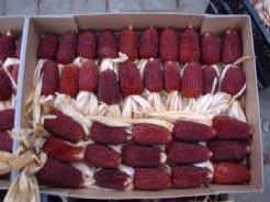 Aardbeienmais zaden gram. en kleinverp - Basiseenheid Aardbeienmais zaden gram. en