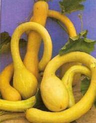 'Trombolino D'' Albenga' - basiseenheid 'Trombolino D'' Albenga'