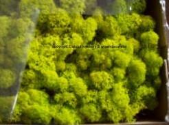 Rendiermos Ijslandsmos LenteGroen +/-250- 500 gram.  Rendiermos Ijslandsmos