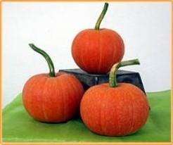 Golden Pumpkin Golden Pumpkin