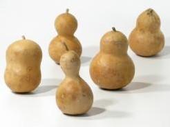 Gedroogde kalebassen klein +/-12-15 cm. voor Paisley chickens