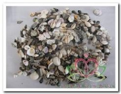 Schelpenmix mini 5 assort kleine vulschelpen 1 kilo, +/- 1-2,5 cm.