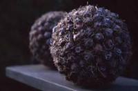 Oasis Styropor bal / bol 12 cm. vol KORTING zie omschrijving-2