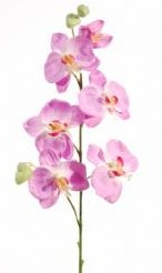 Orchidee LilaRose 6 bloemen / tak Orchidee LilaRo