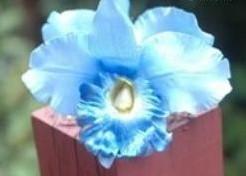 Lichtblauwe Orchidee zijdebloem kunstbloem Lichtblauwe Orchidee zijd
