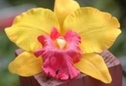 Oranjegeel Orchidee zijdebloem kunstbloem Oranjegeel Orchidee zijde