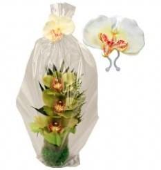 Orchidee wit op clip voor bijvoorbeeld geschenkverpakking Orchidee wit op