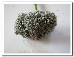Fieldberries Antraciet zilvergrijs /doos voor bloemschik Fieldberries An