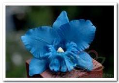 Blauwe Orchidee zijdebloem kunstbloem, kunstorchidee Blauwe Orchidee