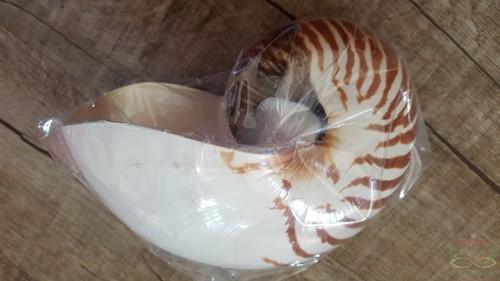 Shell Nautilus 12-15cm naturel Schelpen Grote schelp