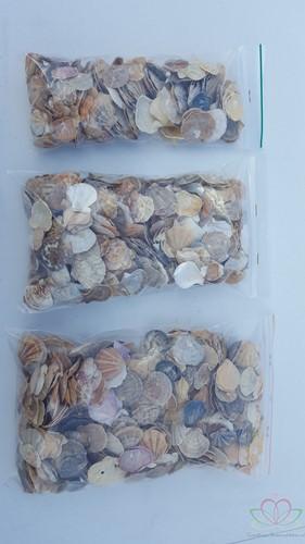 Mantelschelp stuks. Jacobsschelp 600 gr 600 gram