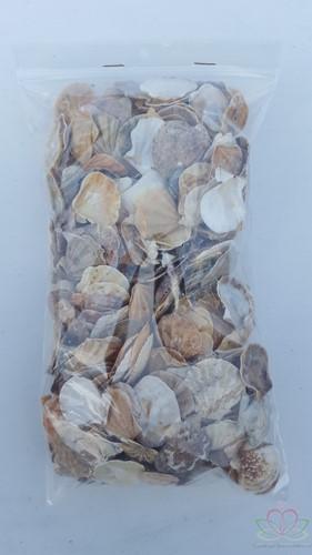 Mantelschelp stuks. Jacobsschelp 400 gr 400 gram
