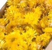 Helichrysum heads strobloemhoofdjes Yellow Geel doos L25.0w25.0h10.0