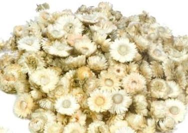 Helichrysum heads strobloemhoofdjes White wit doos L25.0w25.0h10.0