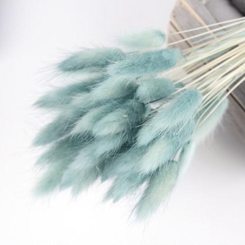 Lagurus Ovatus bundel +/- 30st Blue Pluimgras graspluimen