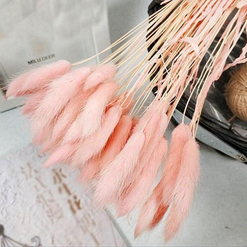 Lagurus Ovatus bundel +/- 30st Softpink Roze Pluimgras graspluimen