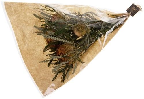 Droogboeket Banksia Dryandra Formosa ca. 35cm Suikerbossie