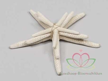 Zeester Starfish wit, +/- 5-10 cm. set van 3 stuks